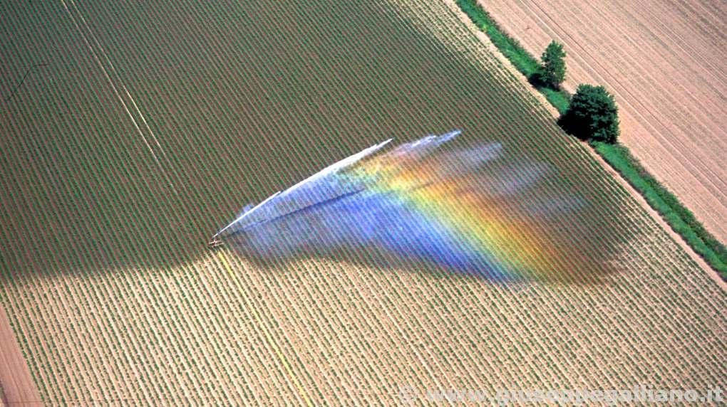video_aziende_agricole_produzione_galliano